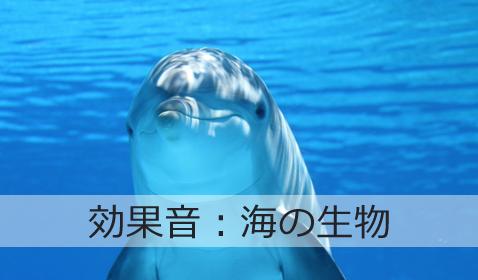 クジラ 鳴き声 ダウンロード